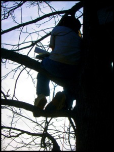 Boy sits in a tree reading.