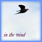 wind8166