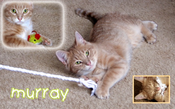 Collage of Murray at play