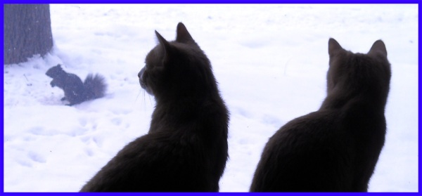 Cats watch the squirrel in the snow through the window.