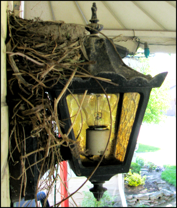 profile of the nest wedged between the porch lamp and the wall