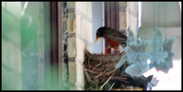 Nest in profile through the bushes, chicks beaks poke above the nest