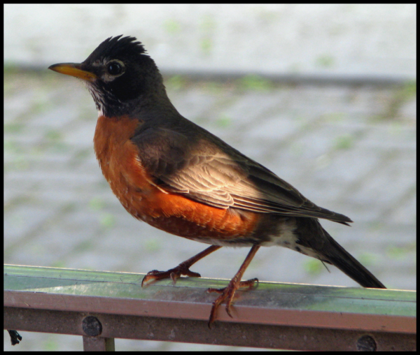 Robin Parent on the porch railing