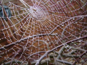 Spiderweb beaded with raindrops