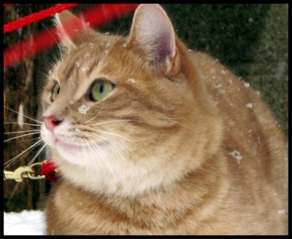 ginger cat watches snow falling
