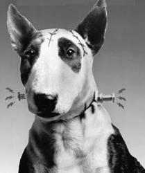 black and white publicity still portrait of the named Dog character from Tim Burton's short film of the same name