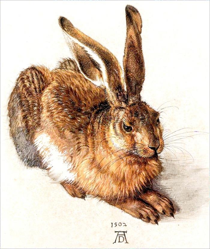 Albrecht Durer's Rabbit